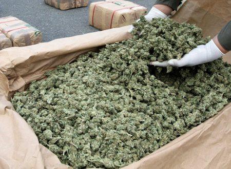 Marijuana, coltivazione, cannabis, stupefacente, offensività